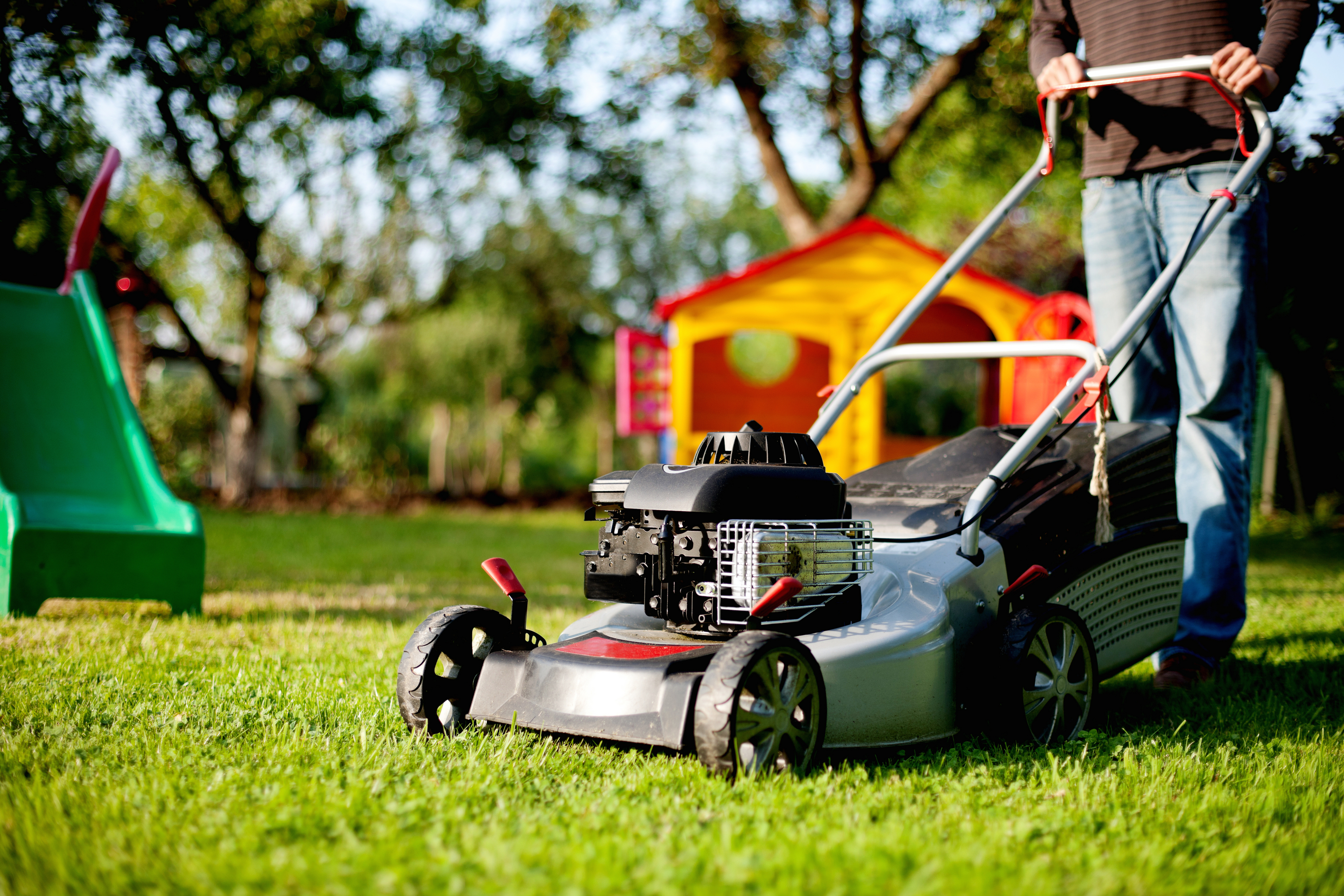 Essential Sir Walter Turf Lawn Care Tips for Spring Season